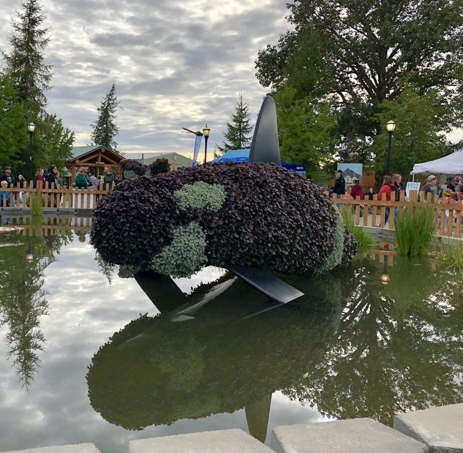 orca living sculpture at alaska state fair.